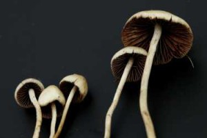 smallmagic-mushrooms-psilocybin-treat-depression_2412012.jpg